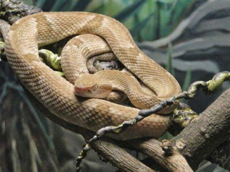 Mơ thấy rắn là điềm báo lành hay dữ? Đánh con gì chính xác?